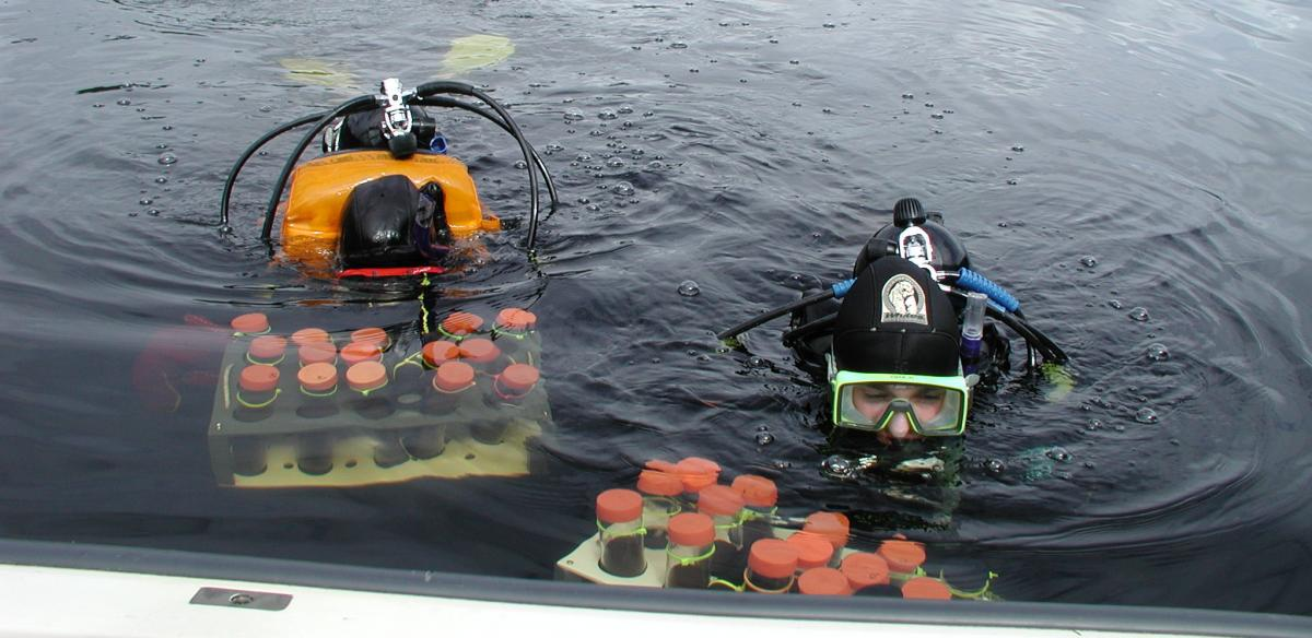 Research divers retrieving core samples