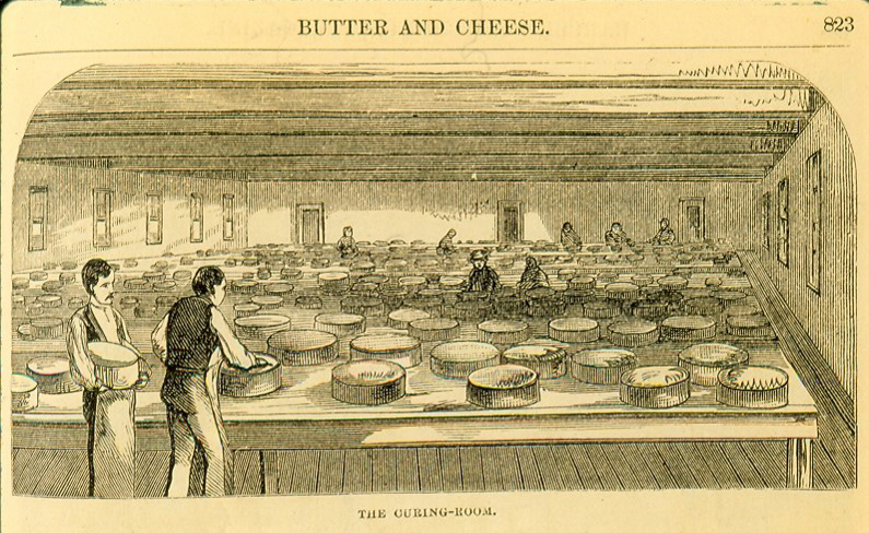 Illustration of curing room in butter and cheese factory