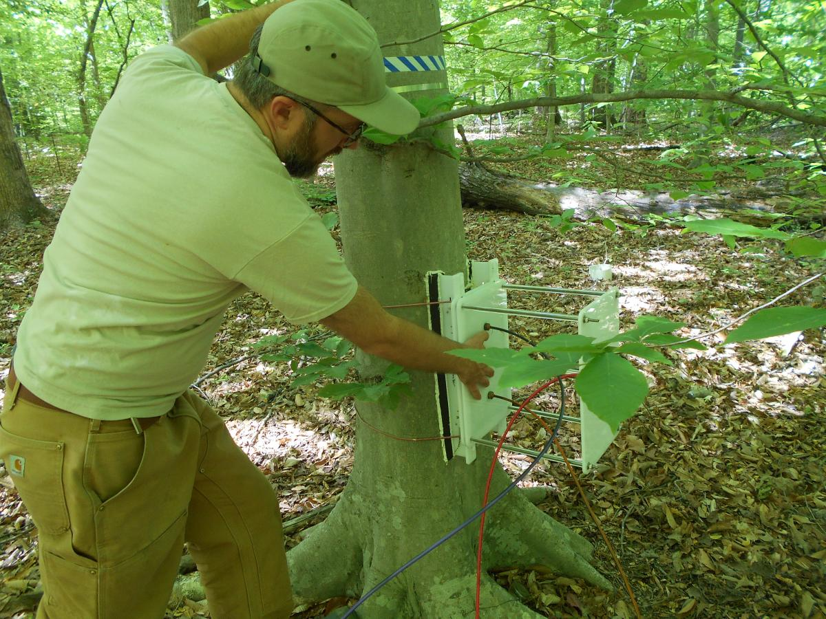 Scientist sets up instrument on tree to measure methane emissions