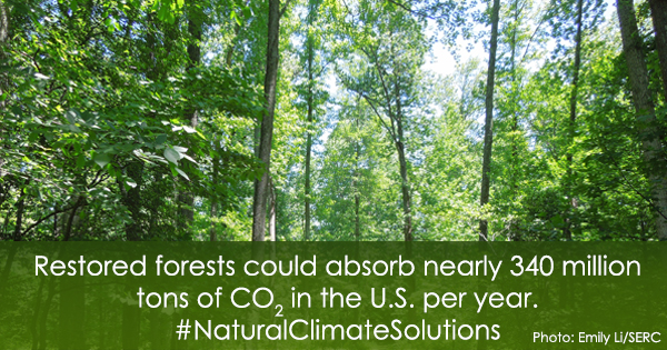 Infocard with picture of forest. Text: Restored forests could absorb nearly 340 million tons of CO2 in the U.S. per year. #NaturalClimateSolutions
