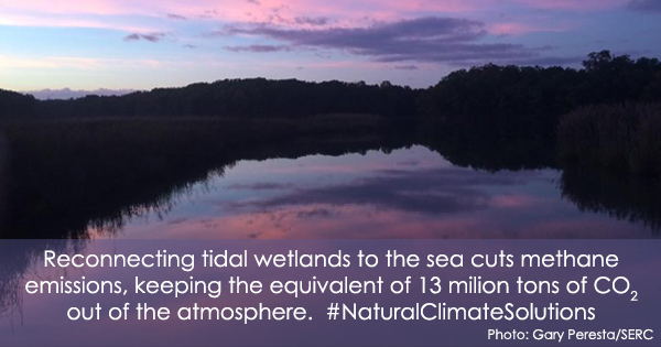 Photo of wetland at sunrise. Text: Reconnecting tidal wetlands to the sea cuts methane emissions, keeping the equivalent of 13 million tons of CO2 out of the atmosphere. #NaturalClimateSolutions