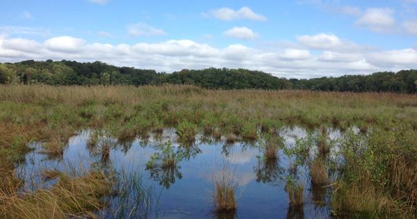 wetland_kirkpatrickmarshflooded_twitter.jpg