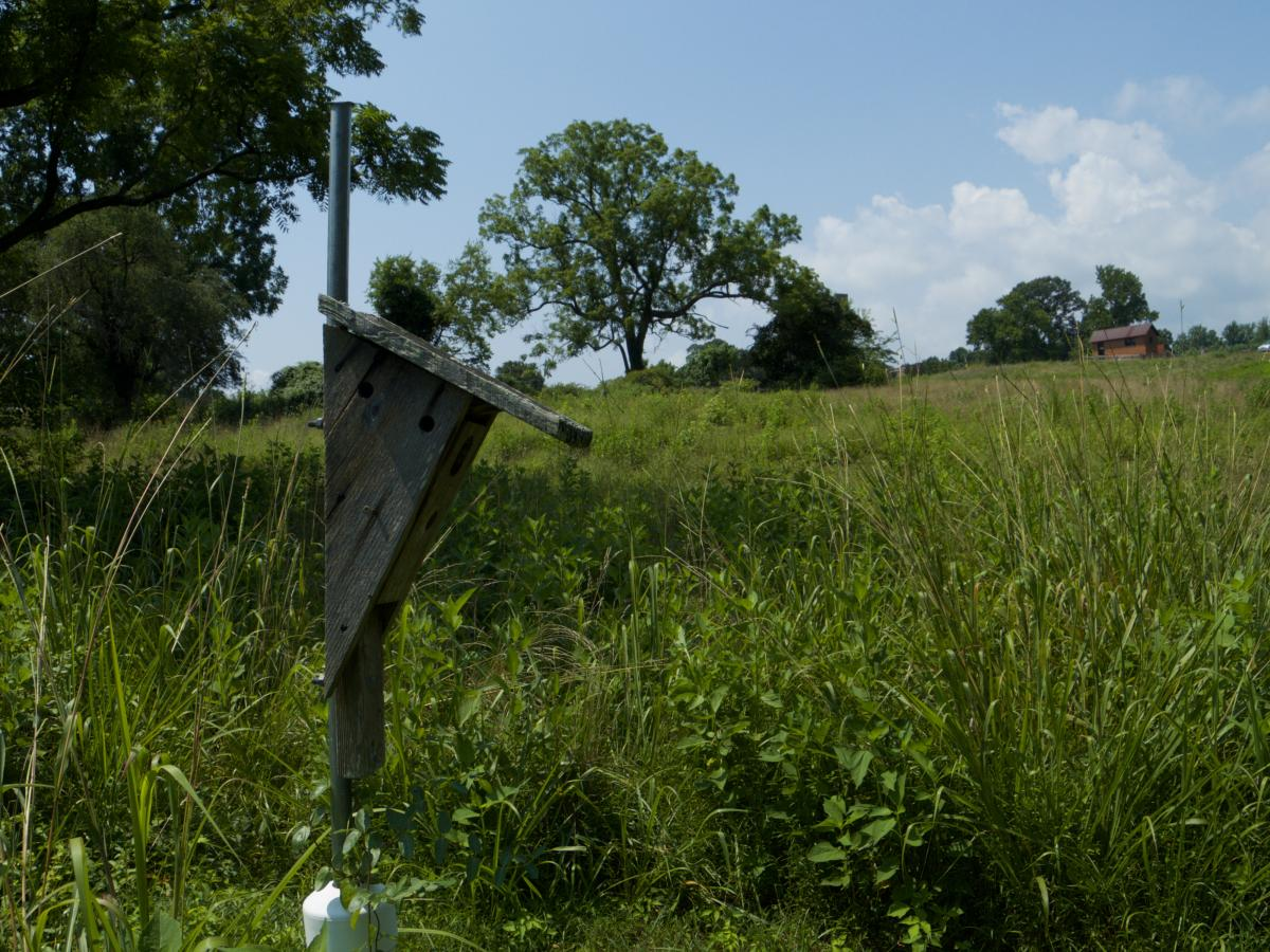 Bluebird box in field