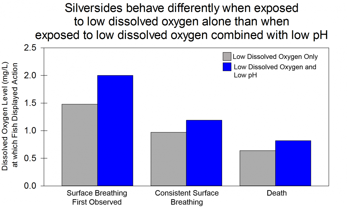 graph of silverside breathing