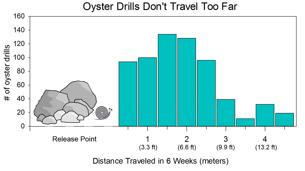oyster drill travel distance