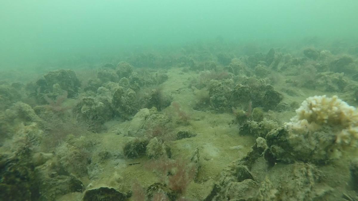 restored reef