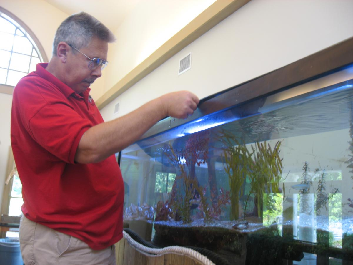SERC education volunteer caring for aquaria