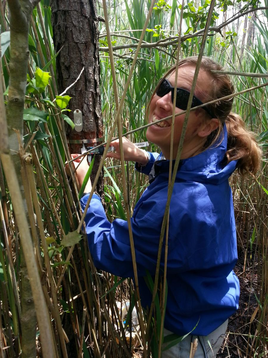 Young woman in blue jacket and sunglasses measuring a tree stem in a marsh