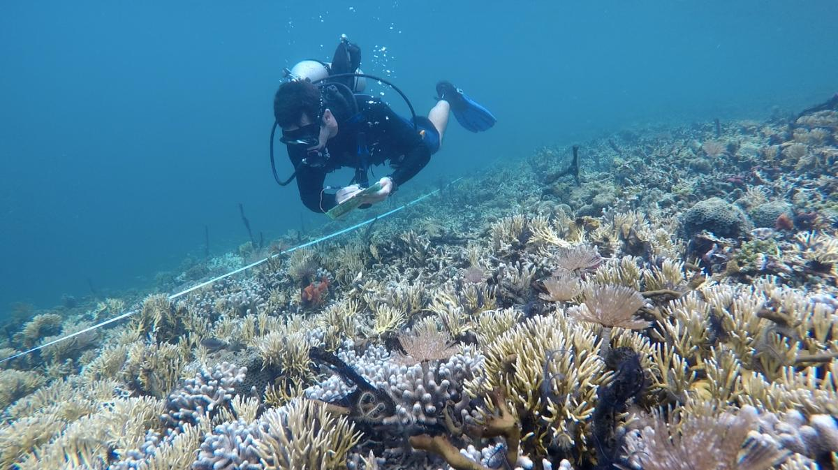 Diver counting fish on reef
