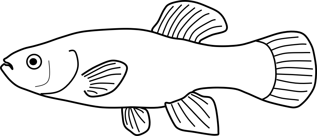 Mummichog fish cartoon