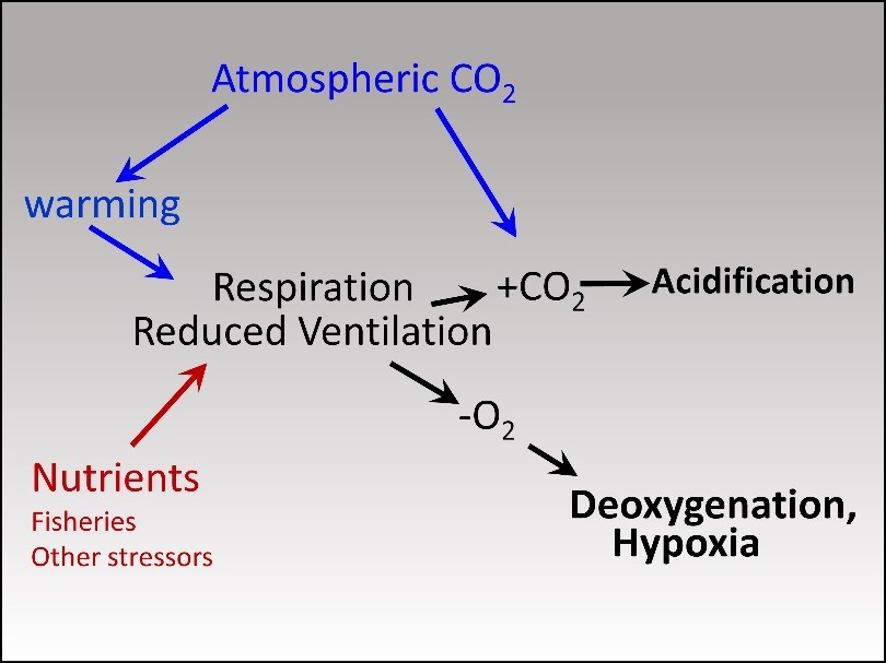 Diagram of relationship between carbon dioxide, and deoxygenation/acidification
