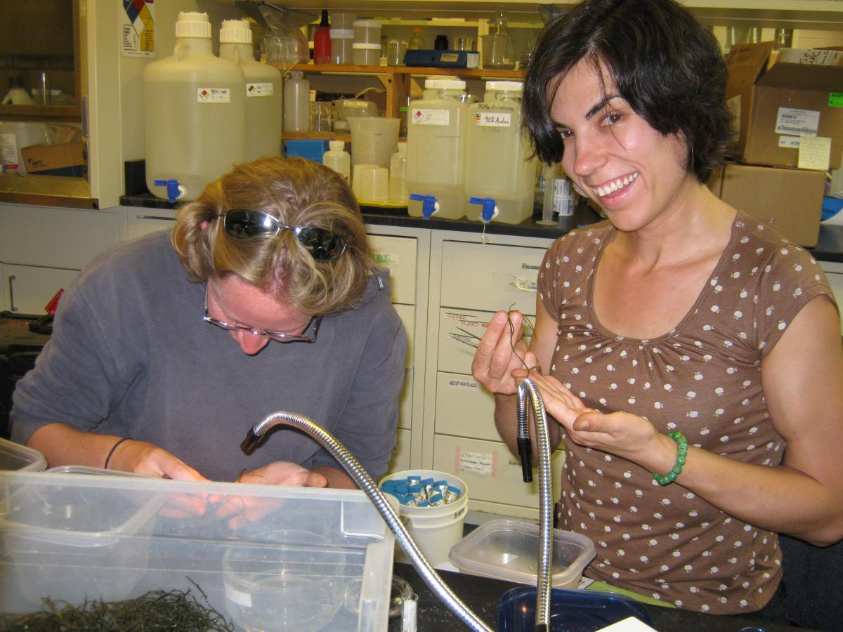Amy Fowler and Anne Phillips sorting wormweed
