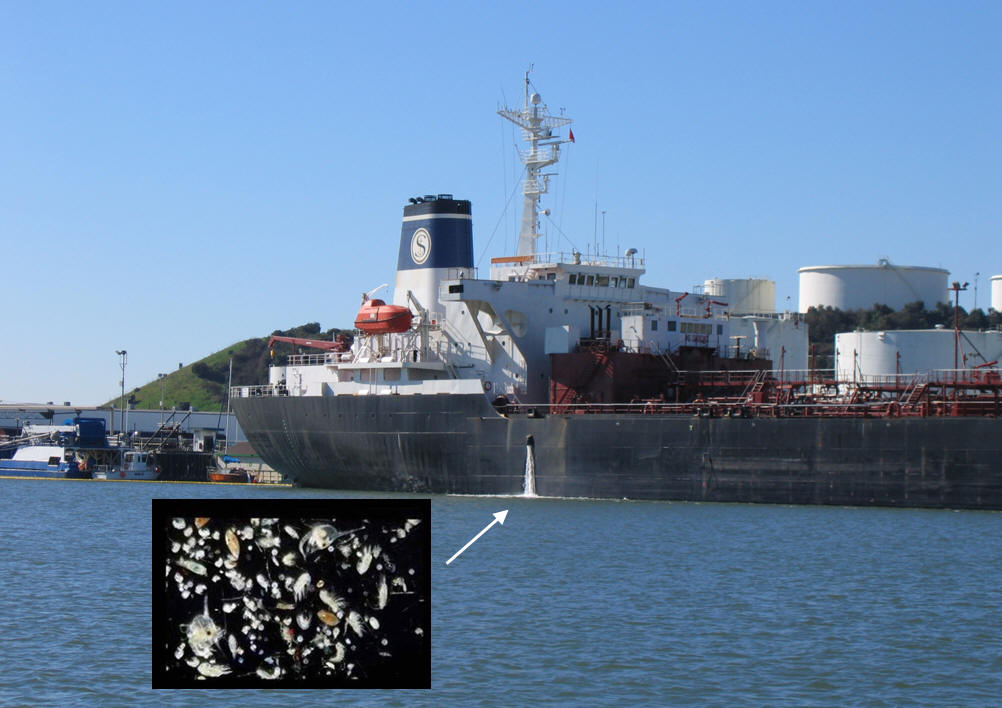 Ship discharging ballast water (pullout slide: microscopic organisms in ballast water)