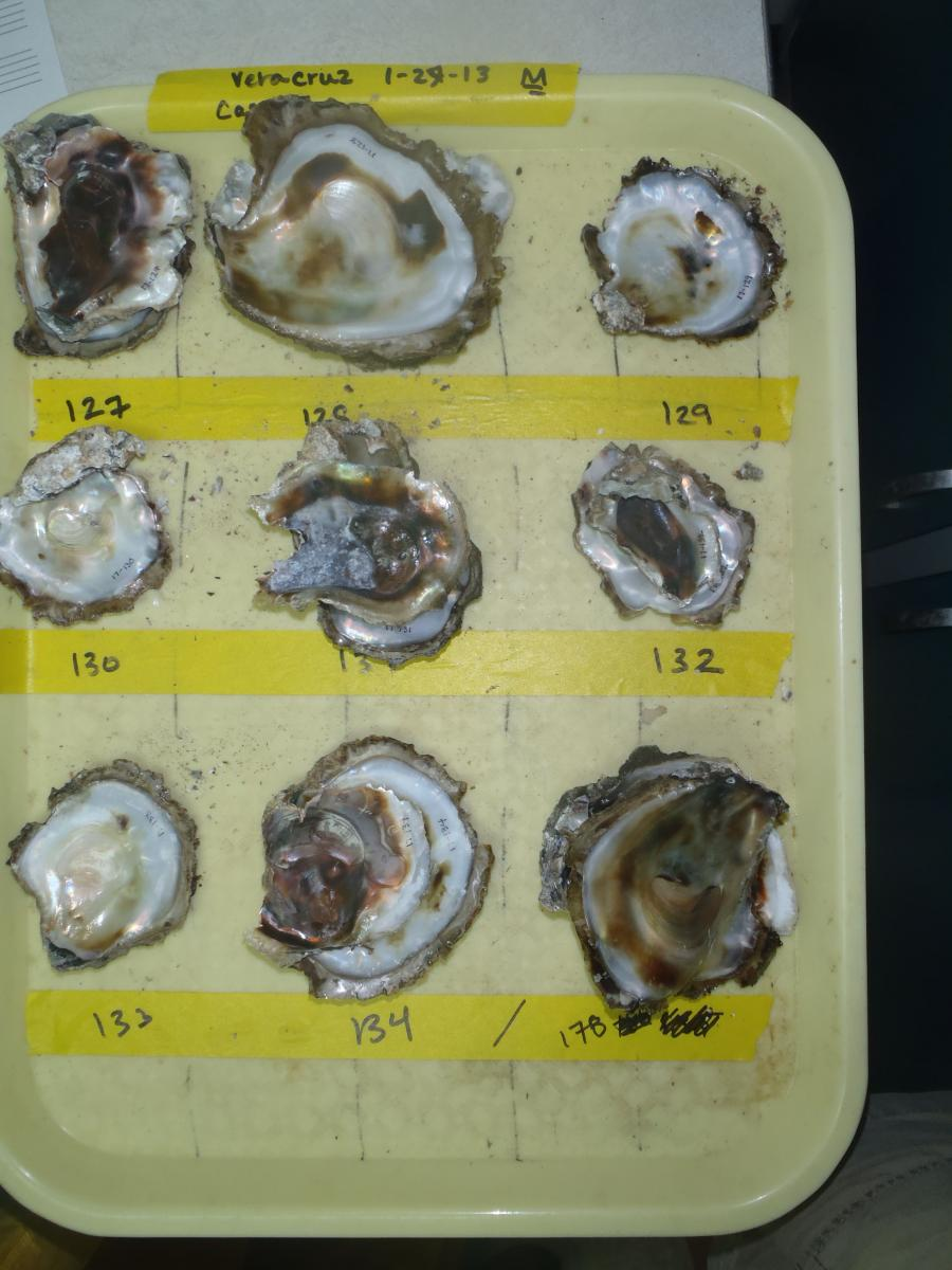 cafeteria_tray_full_of_oysters.jpg