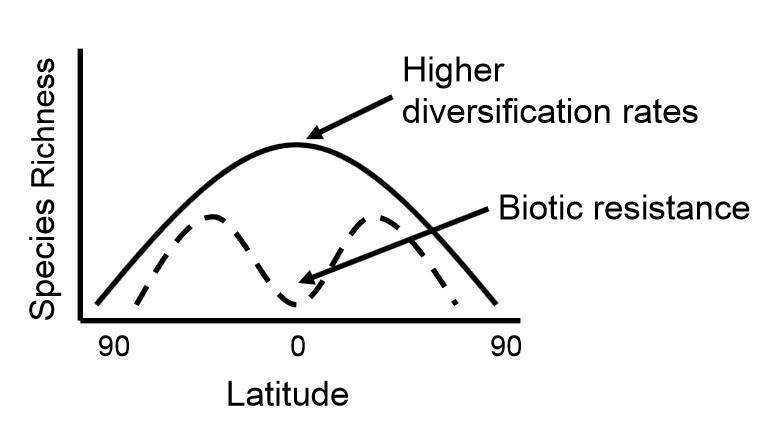 A conceptual model showing biotic resistance across latitude.