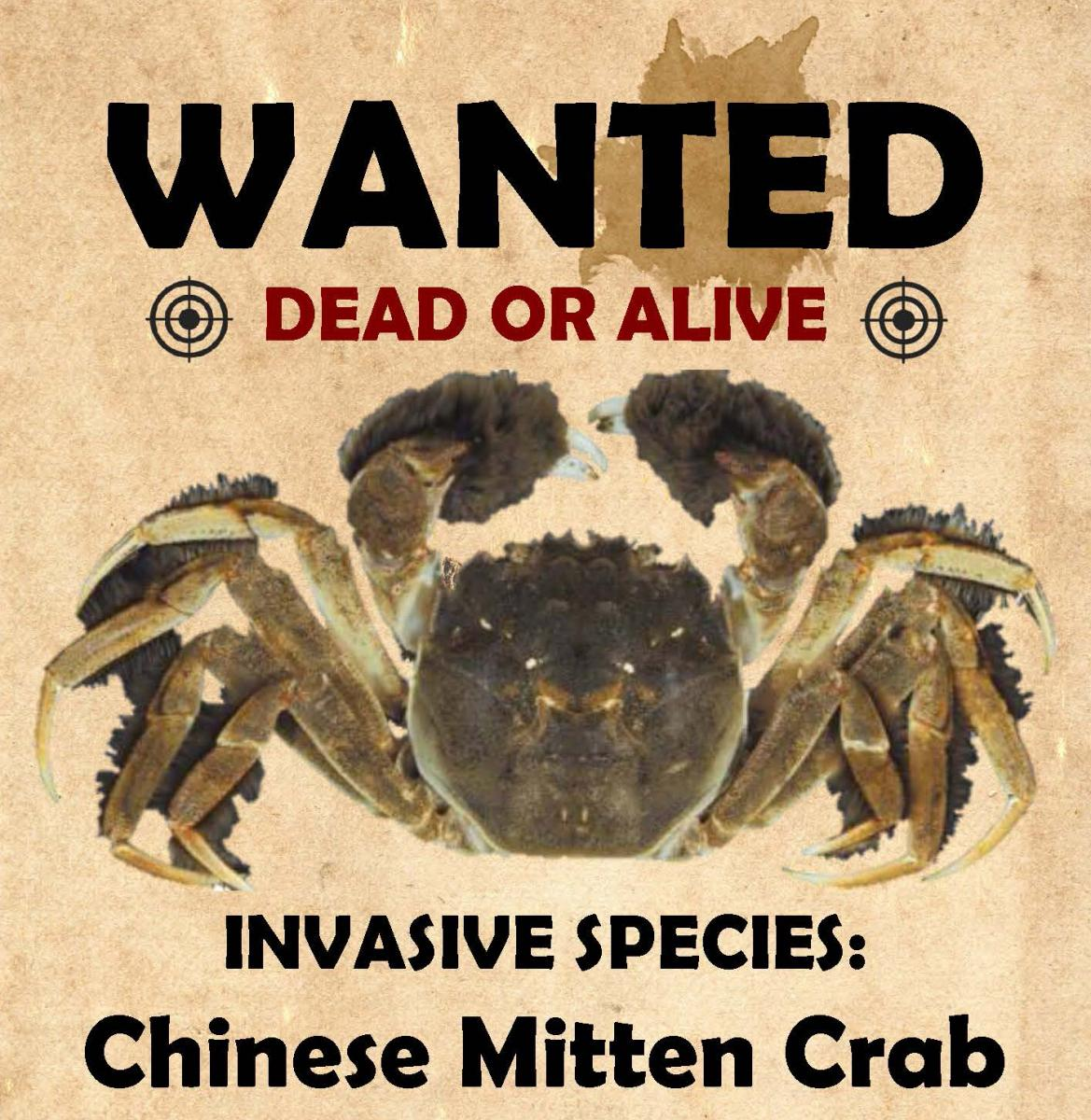 mittencrab_flyer_cropped.jpg