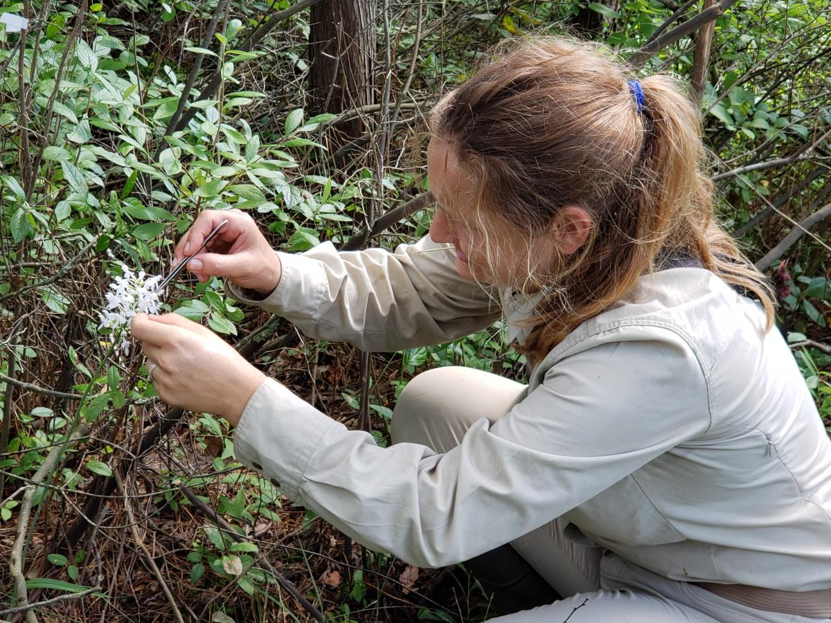 Ida Hartvig hand-pollinating an orchid