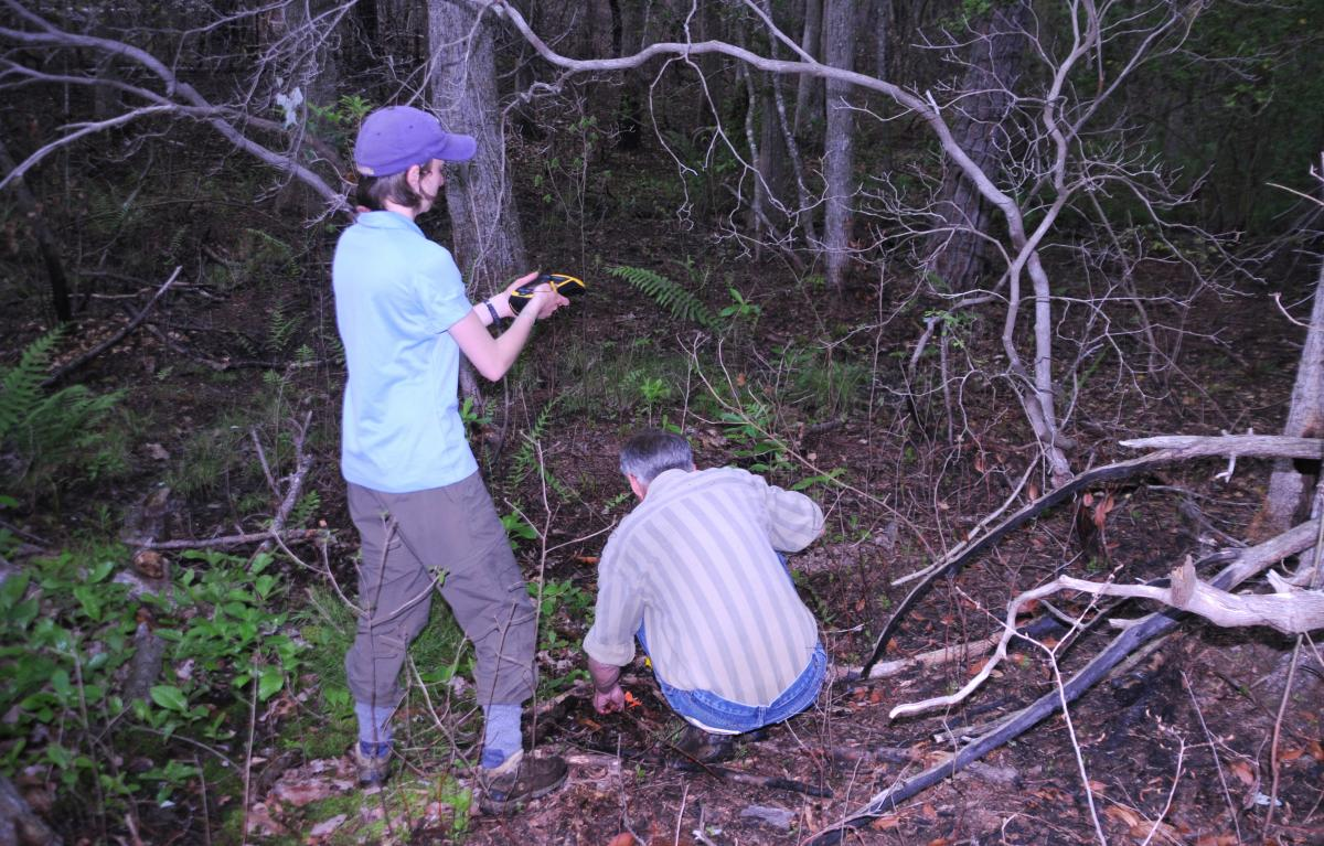 Researchers measuring Helonias in the field