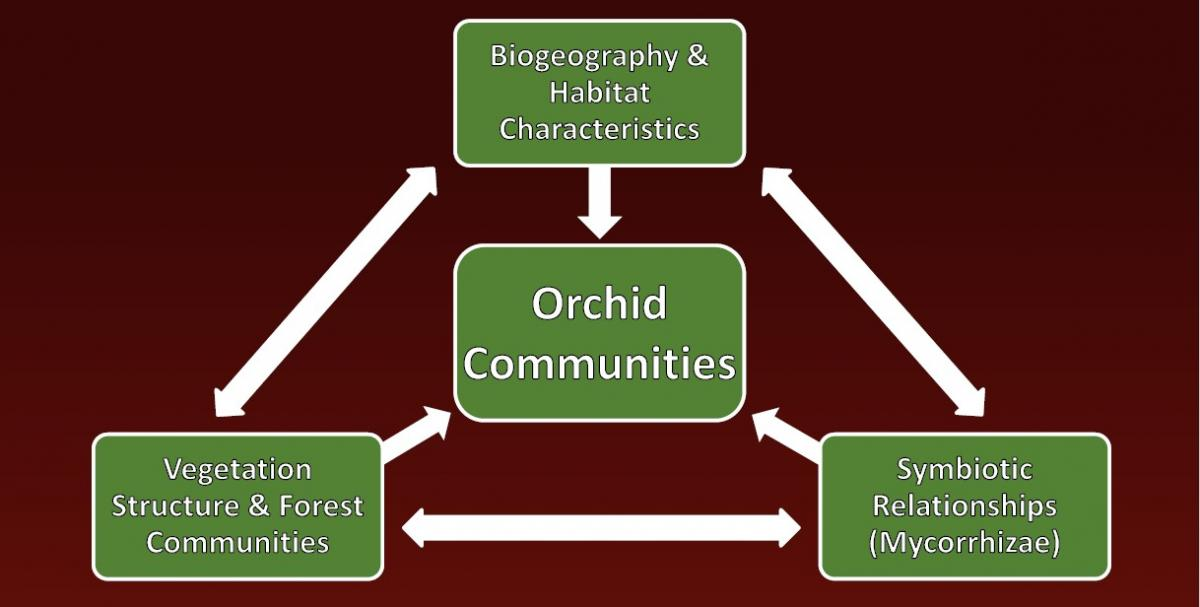 A diagram of orchid-fungus relationships