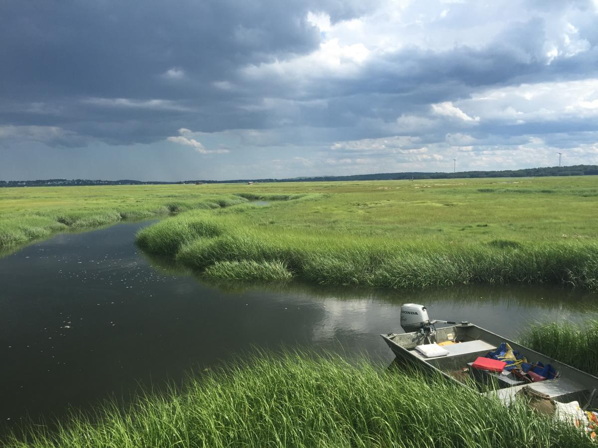 A Spartina marsh and oncoming storm