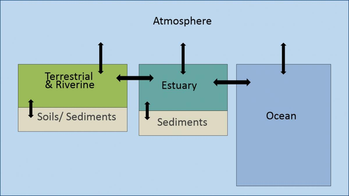 schematic diagram of coastal ocean acidification