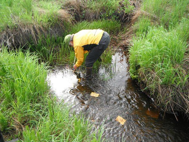 Scientist samples stream in Alaskan wetland