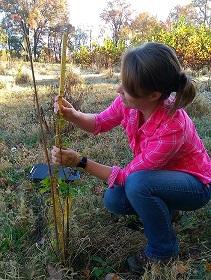 Technician measures tree height