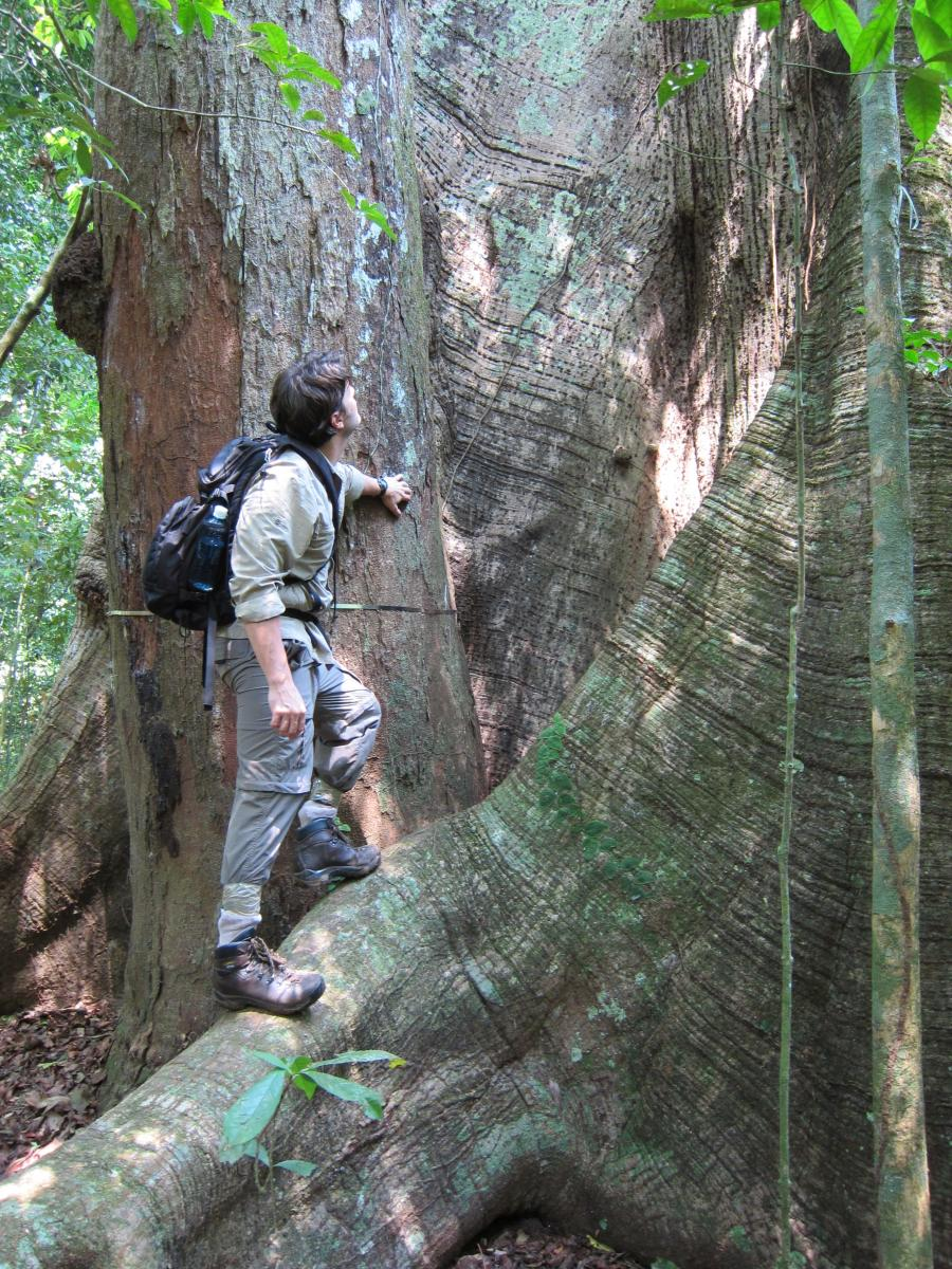 Scientist with kapok tree