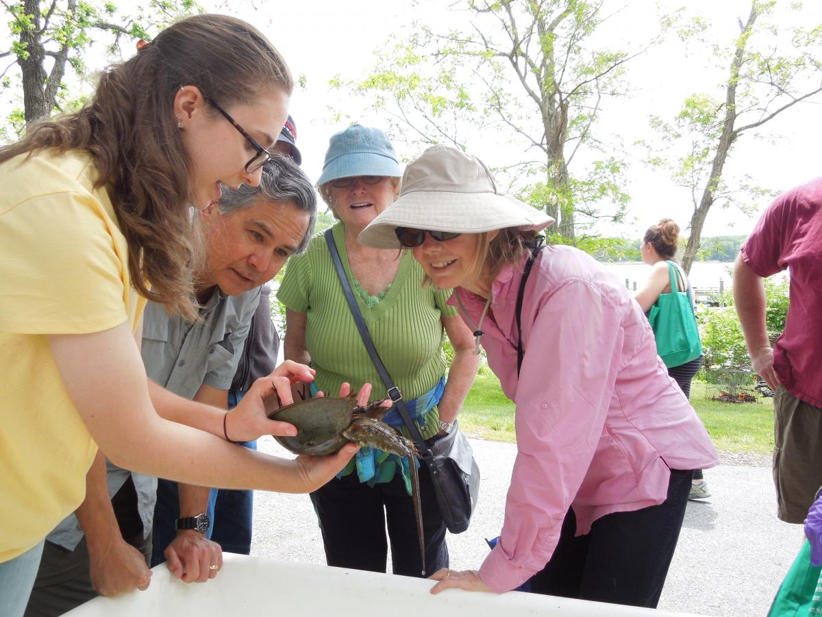Female SERC staffer holds horseshoe crab for visitors to touch