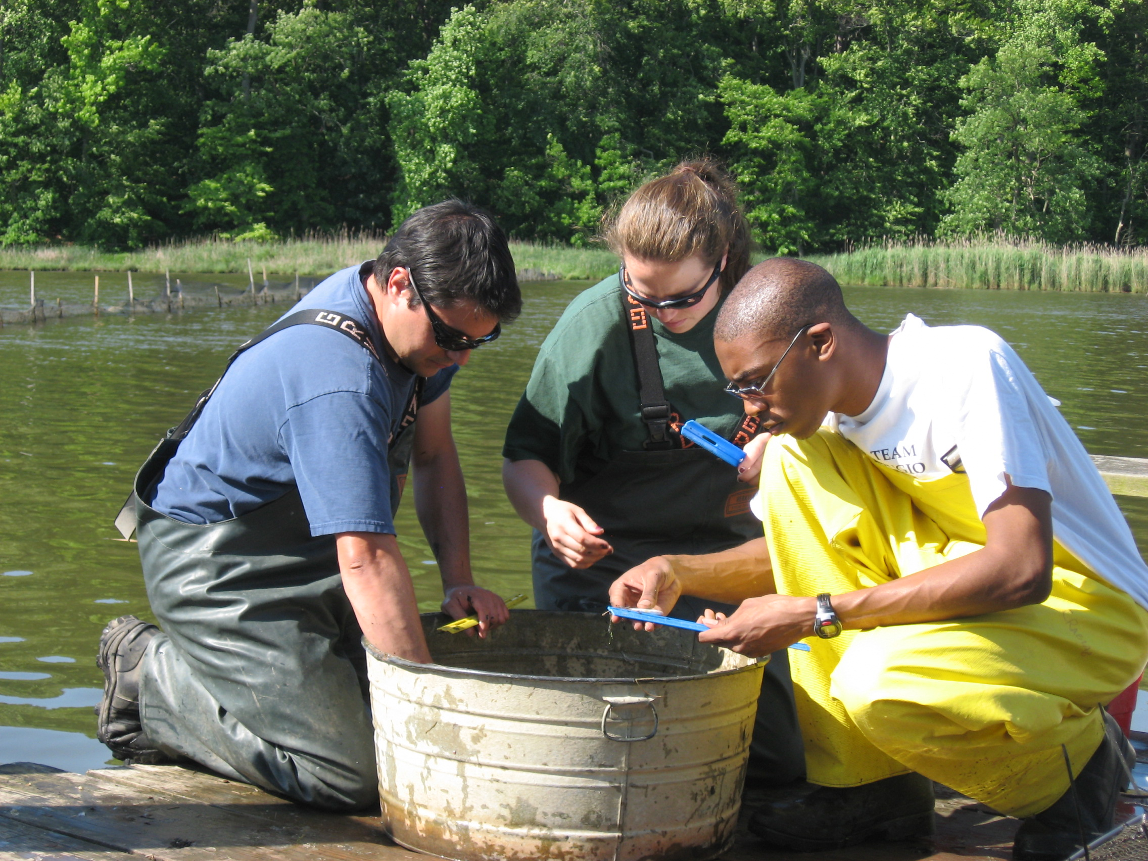 Sampling fish from bucket on river