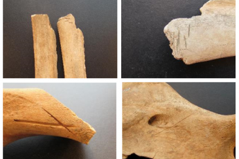 Bones with markings depicting butcher patterns