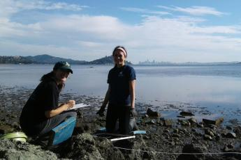 Volunteers removing oyster drills from Richardson Bay