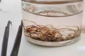 Worms from river otter