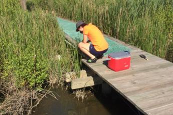 Intern hunting for parasites in marsh