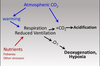 Hypoxia and acidification diagram