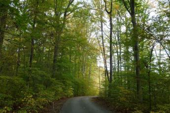 The SERC back road in spring