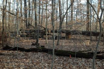 Dead trees on the ForestGEO plot