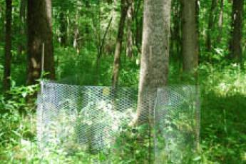 caged plot