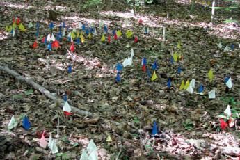 Flags mark locations of Corallorhiza odontorhiza plants