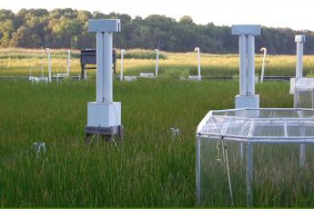 Global Change Research Wetland