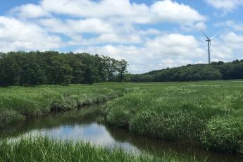 A tidal marsh lined with Spartina alterniflora.
