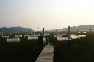 boardwalk with chambers at Global Change Research Wetland