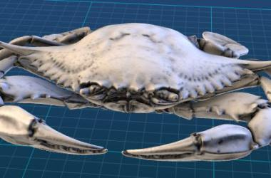 Photograph of blue crab in 3D