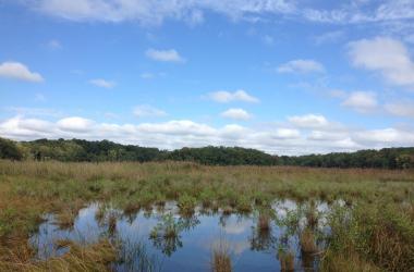 Flooded wetland