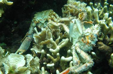dying coral and crab skeletons