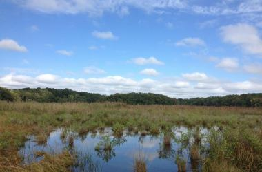 Flooded tidal marsh under blue sky
