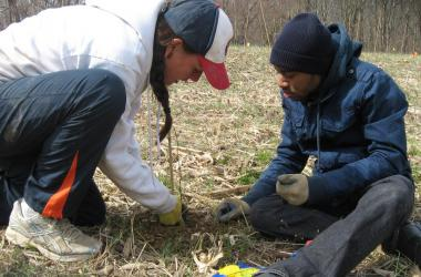 Young white woman and young black man planting tree seedling