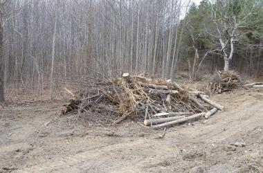 trees cut down in a forest