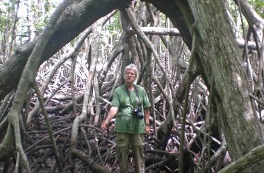 candy feller beneath mangrove tree