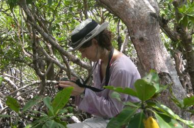 Researcher in tropical forest, Belize